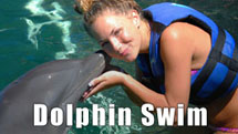 things to do in punta cana dolphin swim