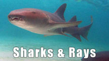 things to do in punta cana sharks and rays