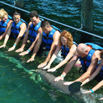 Petting a Dolphin