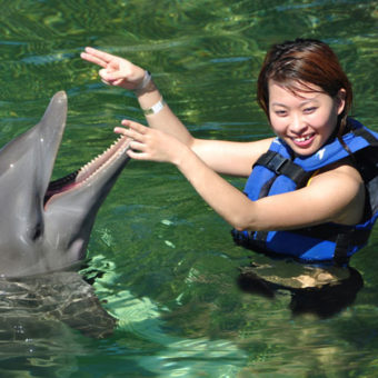 Playing with a Dolphin