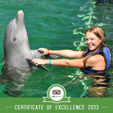 Punta Cana Dolphin Excellence