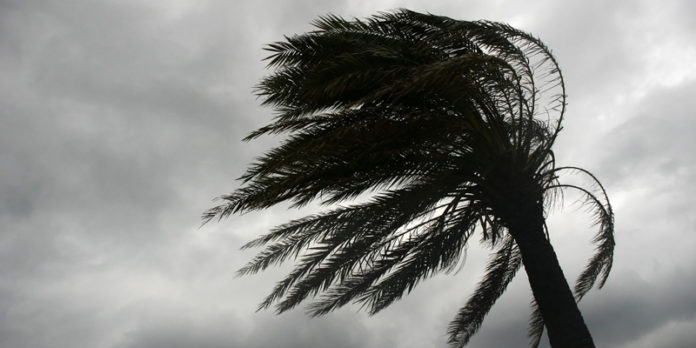 Wind blowing on palm tree