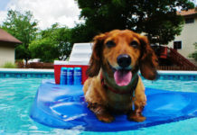Dog in a pool